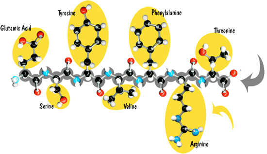 Polypeptide formation for peptide synthesis
