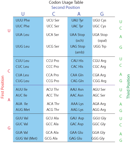 Codon Usage Table Peptide Synthesis