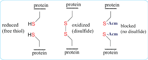 cyclic peptide synthesis with disulfide bonds