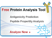 peptide analysis tool for peptide antibodies