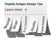 Peptide Antigen Design for Antibodies